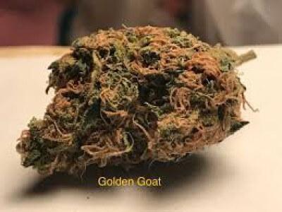 Gyllene getter