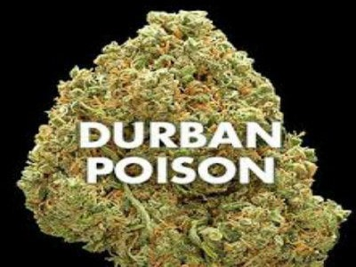 Durban gift